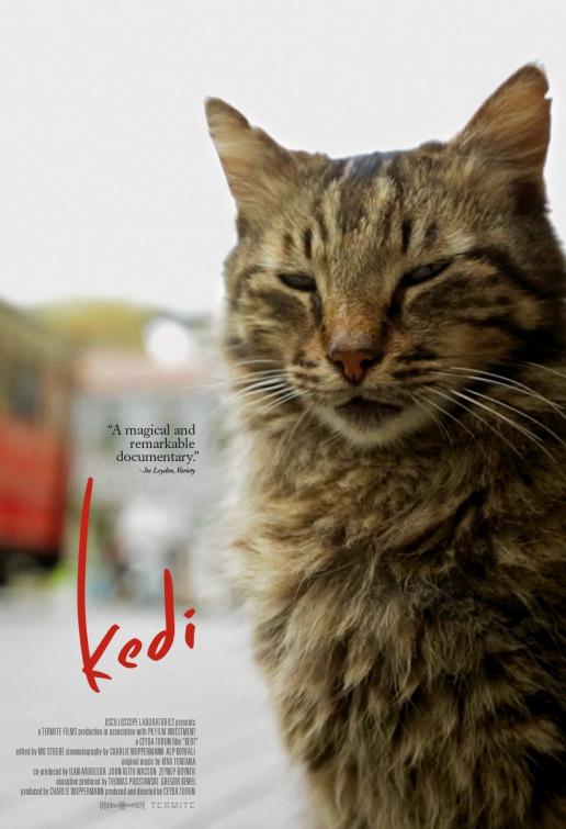kediCatPoster