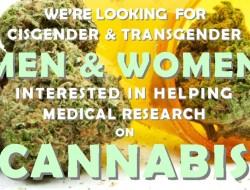CannabisStudy