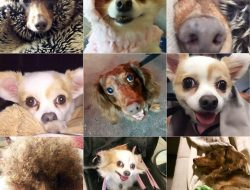 ALL THE DOG BABIES!!!! Photo: Swiped from Gaysha Starr's FB wall