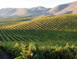 The beautiful Sonoma Valley in Northern California