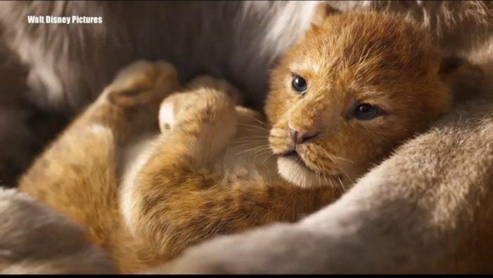 Cute kittie!!!
