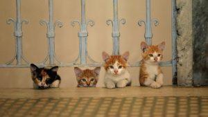 CatDay Kedi